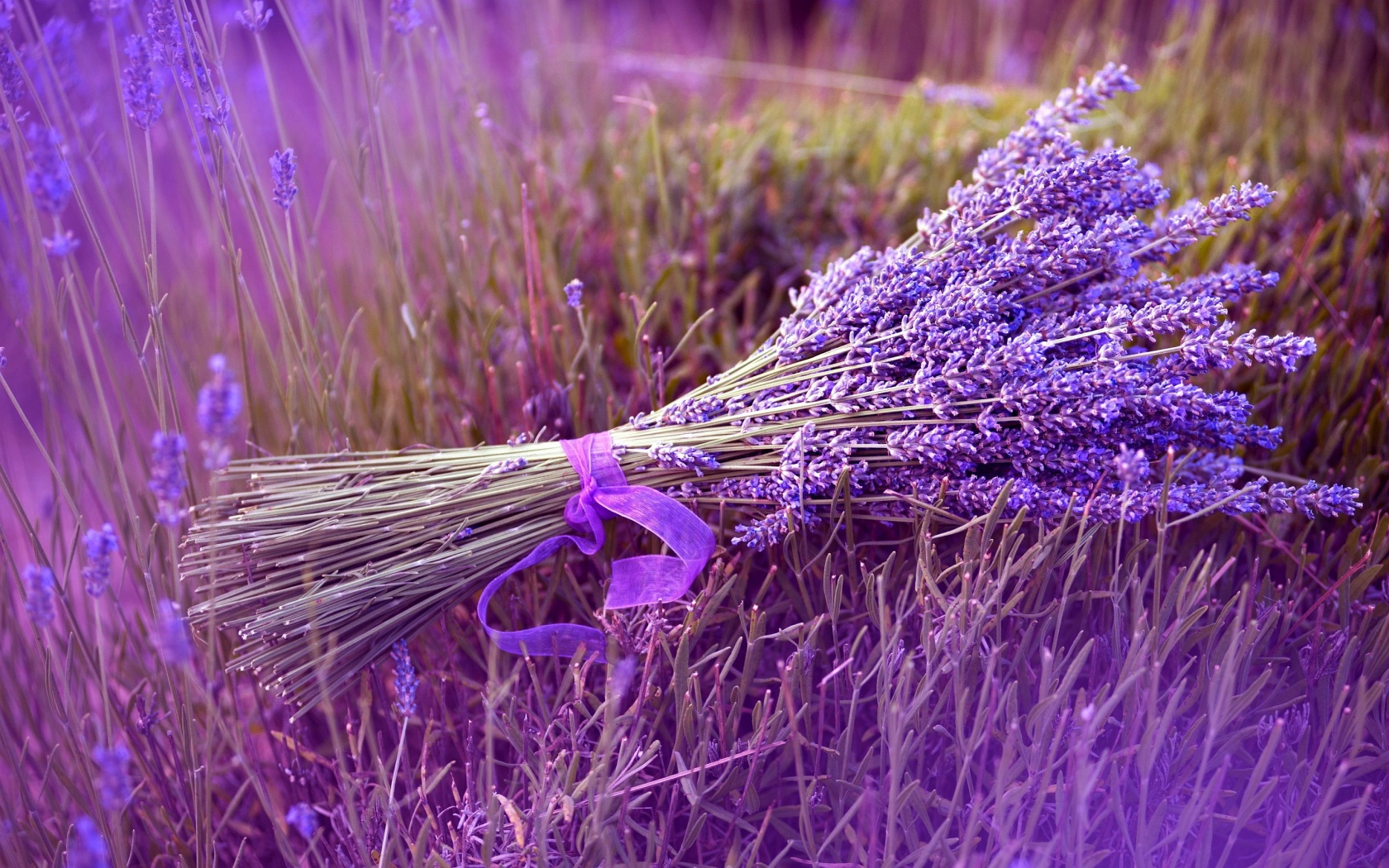 The Lavender Project